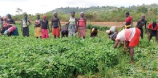 COVID-19: Gombe farmers seek more investment in agriculture