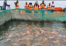 Ogun State Supports Largest Tilapia Fish Farm in Nigeria
