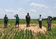 Ogun State Begins Dry Season Harvest in Youth Rice Production Project